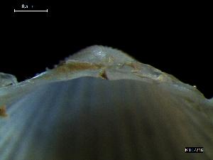 ( - MT07718)  @11 [ ] by-nc-sa (2015) Unspecified Deutsche Zentrum fuer Marine Biodiversitaetsforschung Wilhelmshaven