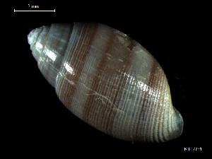 ( - MT07731)  @11 [ ] by-nc-sa (2015) Unspecified Deutsche Zentrum fuer Marine Biodiversitaetsforschung Wilhelmshaven