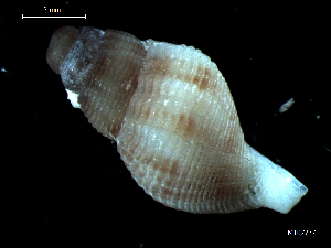 ( - MT07737)  @11 [ ] by-nc-sa (2015) Unspecified Deutsche Zentrum fuer Marine Biodiversitaetsforschung Wilhelmshaven