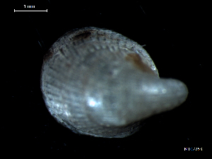( - MT07763)  @12 [ ] by-nc-sa (2015) Unspecified Deutsche Zentrum fuer Marine Biodiversitaetsforschung Wilhelmshaven