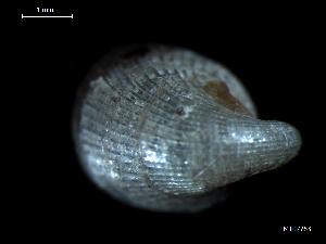 ( - MT07763)  @11 [ ] by-nc-sa (2015) Unspecified Deutsche Zentrum fuer Marine Biodiversitaetsforschung Wilhelmshaven