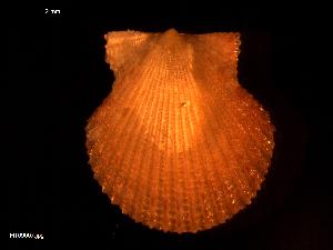 ( - MT09007)  @11 [ ] by-nc-sa (2015) Unspecified Deutsche Zentrum fuer Marine Biodiversitaetsforschung Wilhelmshaven