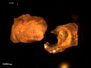( - MT09010)  @11 [ ] CreativeCommons - Attribution Non-Commercial Share-Alike (2015) Unspecified Deutsche Zentrum fuer Marine Biodiversitaetsforschung Wilhelmshaven