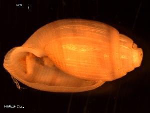 ( - MT09226)  @11 [ ] by-nc-sa (2015) Unspecified Deutsche Zentrum fuer Marine Biodiversitaetsforschung Wilhelmshaven