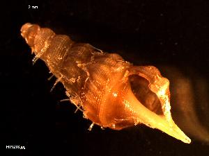 ( - MT09218)  @11 [ ] by-nc-sa (2015) Unspecified Deutsche Zentrum fuer Marine Biodiversitaetsforschung Wilhelmshaven