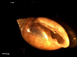 ( - MT09316)  @11 [ ] by-nc-sa (2015) Unspecified Deutsche Zentrum fuer Marine Biodiversitaetsforschung Wilhelmshaven