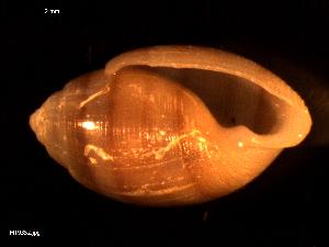 ( - MT09352)  @11 [ ] by-nc-sa (2015) Unspecified Deutsche Zentrum fuer Marine Biodiversitaetsforschung Wilhelmshaven