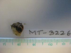 ( - MT03226)  @11 [ ] by-nc-sa (2014) Michael Raupach, DZMB Deutsches Zentrum fuer Marine Biodiversitaetsforschung