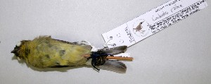 ( - CNAV028091)  @13 [ ] by-nc-sa - Creative Commons - Attribution Non-Comm Share-Alike (2011) Patricia Escalante Pliego Universidad Nacional Autonoma de Mexico, Instituto de Biologia