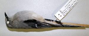 ( - CNAV023243)  @11 [ ] CreativeCommons - Attribution Non-Commercial Share-Alike (2011) Patricia Escalante Pliego Universidad Nacional Autonoma de Mexico, Instituto de Biologia