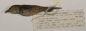 ( - MNHN_5955)  @11 [ ] c (2016) Museo Nacional de Historia Natural Museo Nacional de Historia Natural