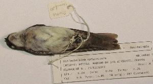 ( - MNHN_6040)  @11 [ ] c (2015) Museo Nacional de Historia Natural Museo Nacional de Historia Natural