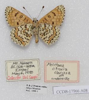 (Melitaea cinxia clarissa - CCDB-17966 A08)  @13 [ ] Copyright (2014) McGuire Center, University of Florida McGuire Center, University of Florida