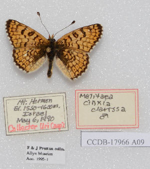 (Melitaea cinxia clarissa - CCDB-17966 A09)  @13 [ ] Copyright (2014) McGuire Center, University of Florida McGuire Center, University of Florida