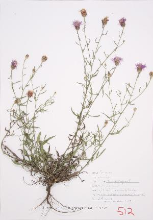 ( - UD 029)  @11 [ ] Copyright (2009) Steven Newmaster University of Guelph BIO Herbarium