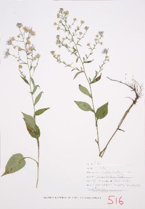 ( - UD 034)  @11 [ ] Copyright (2009) Steven Newmaster University of Guelph BIO Herbarium