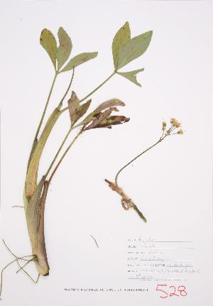 ( - JH 005)  @11 [ ] Copyright (2009) Unspecified University of Guelph BIO Herbarium