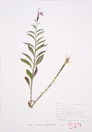 ( - UD 035)  @11 [ ] Copyright (2009) Steven Newmaster University of Guelph BIO Herbarium
