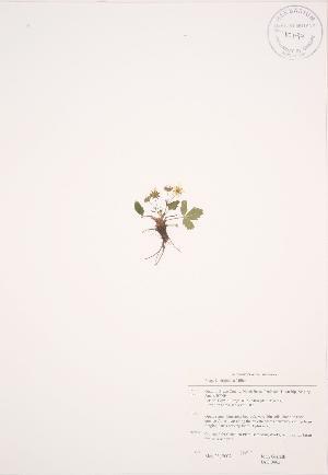 ( - JAG 0462)  @11 [ ] Copyright (2009) Steven Newmaster University of Guelph BIO Herbarium