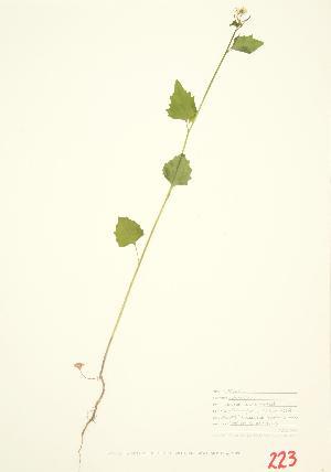 ( - MMD 001)  @11 [ ] Copyright (2009) Steven Newmaster University of Guelph BIO Herbarium