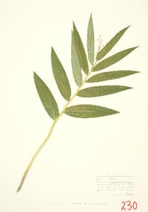 ( - JEM 012)  @11 [ ] Copyright (2009) Unspecified University of Guelph BIO Herbarium