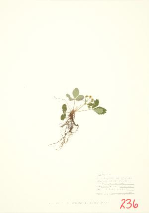 ( - UD 010)  @11 [ ] Copyright (2009) Steven Newmaster University of Guelph BIO Herbarium