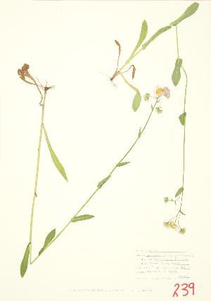( - JEM 035)  @11 [ ] Copyright (2009) Steven Newmaster University of Guelph BIO Herbarium