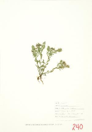 ( - JEM 022)  @11 [ ] Copyright (2009) Steven Newmaster University of Guelph BIO Herbarium