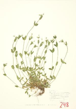 ( - JEM 007)  @11 [ ] Copyright (2009) Steven Newmaster University of Guelph BIO Herbarium