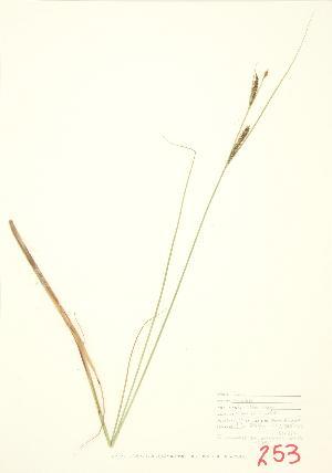 ( - JEM 017)  @11 [ ] Copyright (2009) Steven Newmaster University of Guelph BIO Herbarium