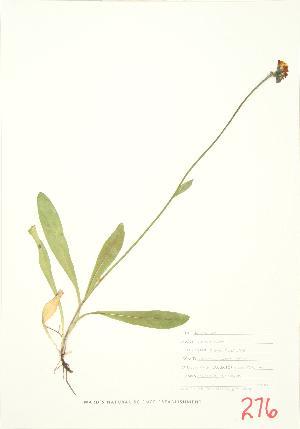 ( - JEM 041)  @11 [ ] Copyright (2009) Steven Newmaster University of Guelph BIO Herbarium