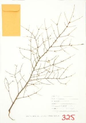 ( - JEM 070)  @11 [ ] Copyright (2009) Unspecified University of Guelph BIO Herbarium