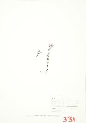 (Clinopodium - JEM 083B)  @11 [ ] Copyright (2009) Unspecified University of Guelph BIO Herbarium