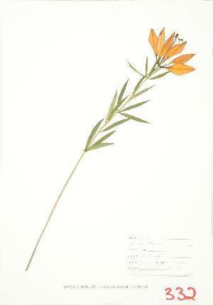 (Lilium philadelphicum - JEM 076)  @11 [ ] Copyright (2009) Unspecified University of Guelph BIO Herbarium