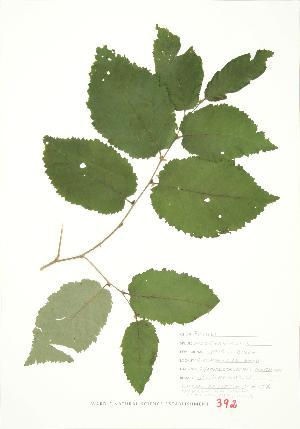 ( - JEM 156)  @11 [ ] Copyright (2009) Steven Newmaster University of Guelph BIO Herbarium
