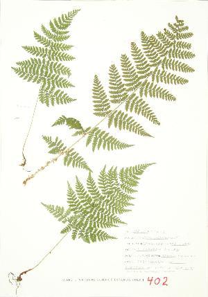 ( - JEM 153)  @11 [ ] Copyright (2009) Steven Newmaster University of Guelph BIO Herbarium
