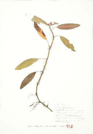( - JEM 107)  @11 [ ] Copyright (2009) Steven Newmaster University of Guelph BIO Herbarium