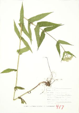 ( - JEM 092)  @11 [ ] Copyright (2009) Unspecified University of Guelph BIO Herbarium