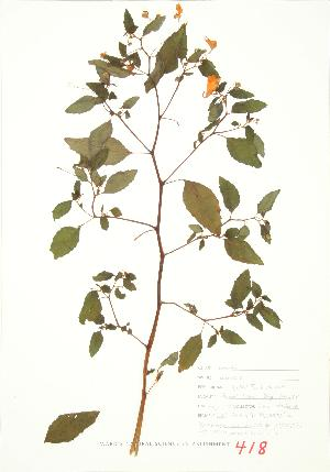 ( - JEM 091)  @11 [ ] Copyright (2009) Unspecified University of Guelph BIO Herbarium