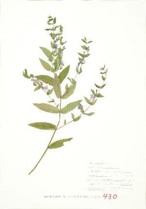 ( - JEM 110)  @11 [ ] Copyright (2009) Steven Newmaster University of Guelph BIO Herbarium