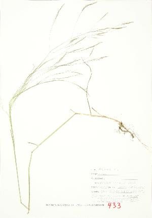 ( - JEM 115)  @11 [ ] Copyright (2009) Unspecified University of Guelph BIO Herbarium