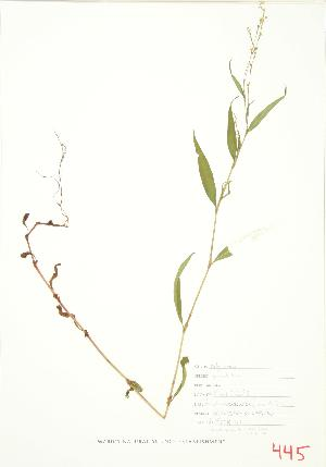 ( - JEM 126)  @11 [ ] Copyright (2009) Unspecified University of Guelph BIO Herbarium