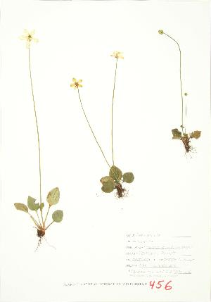 ( - JEM 136)  @11 [ ] Copyright (2009) Unspecified University of Guelph BIO Herbarium