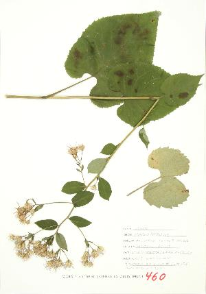 ( - JEM 134)  @11 [ ] Copyright (2009) Unspecified University of Guelph BIO Herbarium