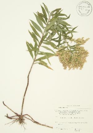 ( - JAG 0238)  @11 [ ] Copyright (2009) Steven Newmaster University of Guelph BIO Herbarium