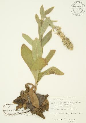 ( - JAG 0247)  @11 [ ] Copyright (2009) Steven Newmaster University of Guelph BIO Herbarium