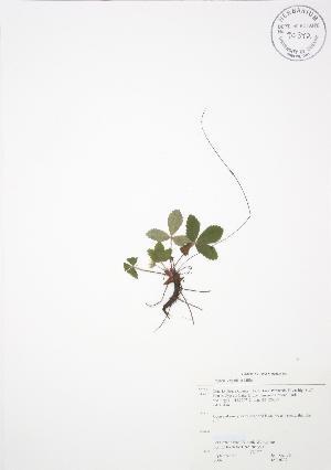 ( - JAG 0209)  @11 [ ] Copyright (2009) Steven Newmaster University of Guelph BIO Herbarium