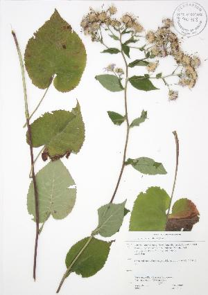 ( - JAG 0213)  @11 [ ] Copyright (2009) Unspecified University of Guelph BIO Herbarium