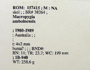 (Macropygia - 1B-940)  @12 [ ] CreativeCommons - Attribution (2010) Erika Tavares Royal Ontario Museum