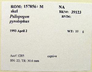 (Megalaimidae - 1B-1637)  @12 [ ] CreativeCommons - Attribution (2010) Erika Tavares Royal Ontario Museum